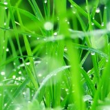 samsung-galaxy-s3-wallpaper-plants